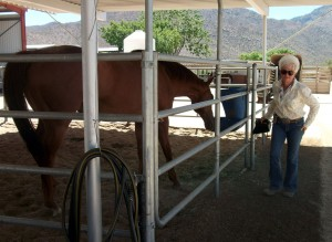 Patti Shirley feeds some of the horses on her retired racehorse property.